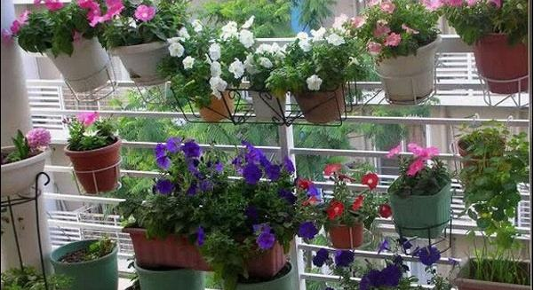 家庭阳台适合养的花卉有哪些