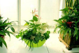 越冬花卉春季出室养护方法技巧